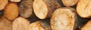 Seconde professionnelle indifférenciée Métiers du bois