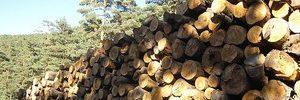 Seconde indéterminée génie bois